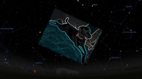 Nemo constellation