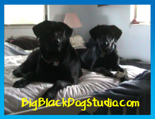 bigblackdogstudio3