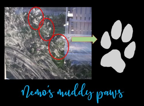 The origin of My Nemo's pawprint graphic